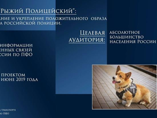 Инстаграм «корги-полицейского» из Нижнего читают 12 тыс человек