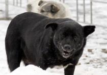 Стали известны подробности отравления мужчины ловцами собак в Зеленограде