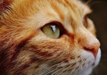 «Моя кошка гибнет в Ухане»: трагедии животных на фоне коронавируса
