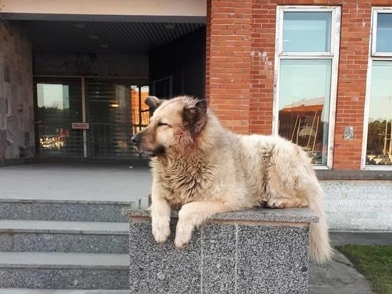 Бездомный пес Кефир победил в конкурсе «Лучшая собака России»