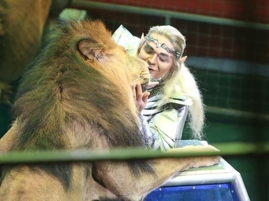 """В Ярославском цирке эльф целуется со львами, а медведи играют в футбол: как прошла премьера шоу """"Львы в садах Риверделла"""""""