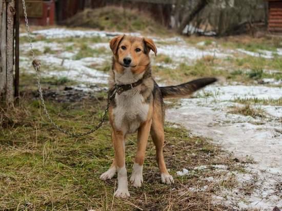 Пенсионерка из Плюссы спасла от смерти 15 собак