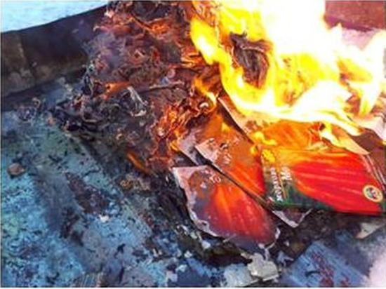 В Чувашии сожгли 250 пакетов с семенами зараженной моркови