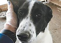 Съевшая собаку из приюта на Сахалине пара была хорошо одета