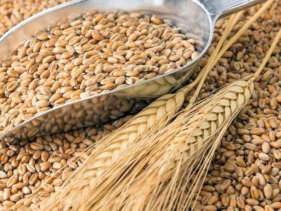 В Калмыкию из Волгоградской области завезли карантинную пшеницу