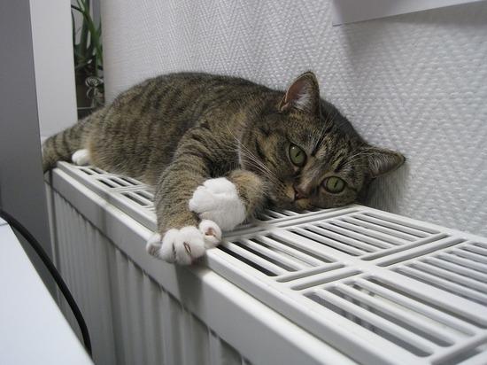Синоптик пообещал тепло в Петербурге до пятницы