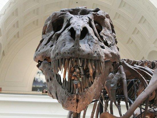 В Канаде обнаружили останки нового вида тираннозавров
