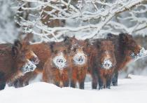 Госдума в третьем чтении приняла законопроект о вольерной охоте