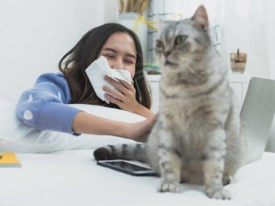 Ученые назвали причину аллергенности кошек