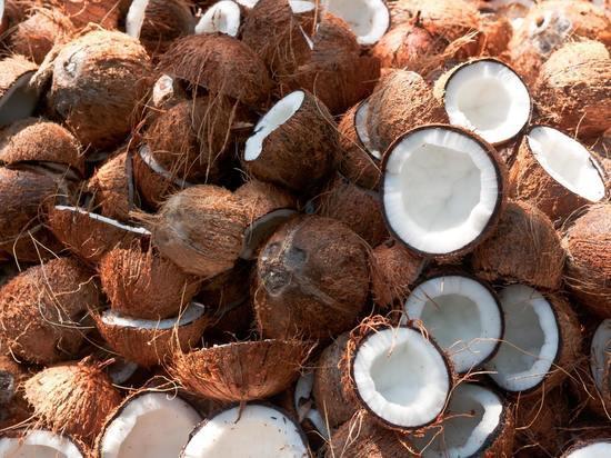 Что можно выращивать волгоградцам на «кокосовых грядках»