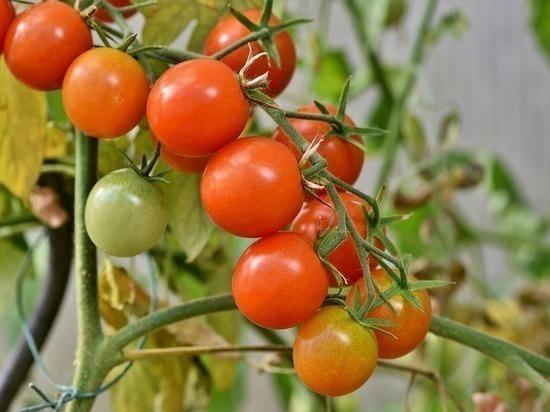 Ставрополье полностью обеспечило себя овощехранилищами