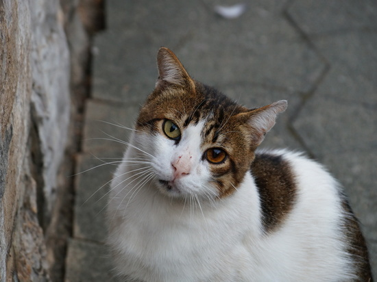 Установлена вероятная причина аллергии на кошек