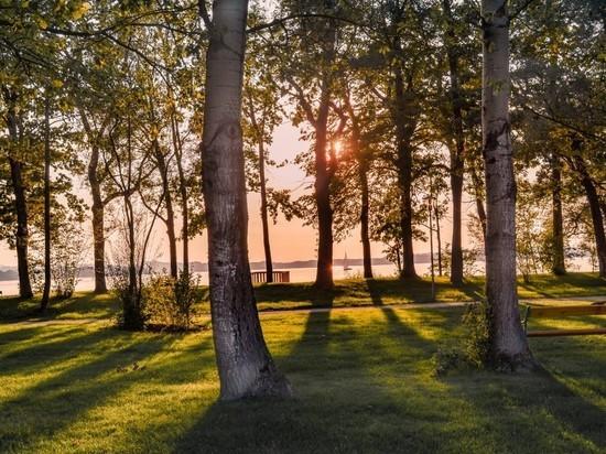 Восстановить леса помогут клоны деревьев