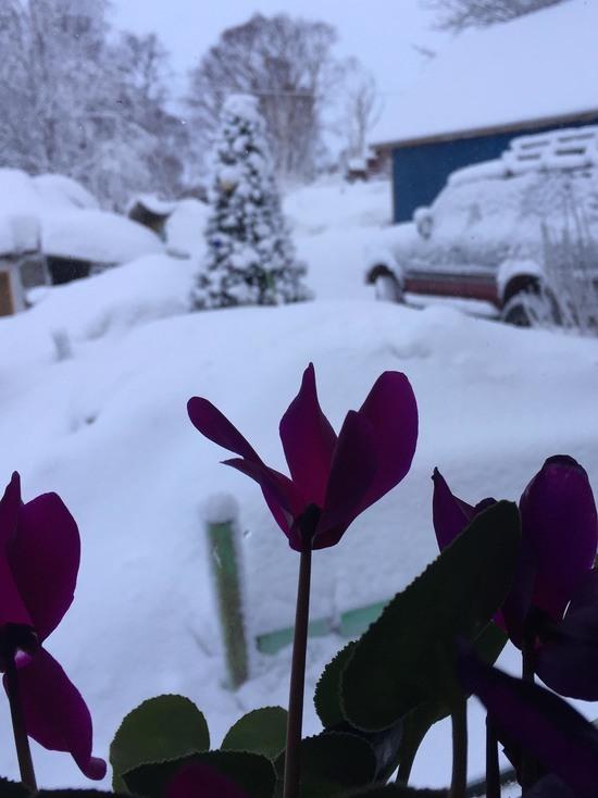 Начало февраля на Камчатке было экстремально холодным