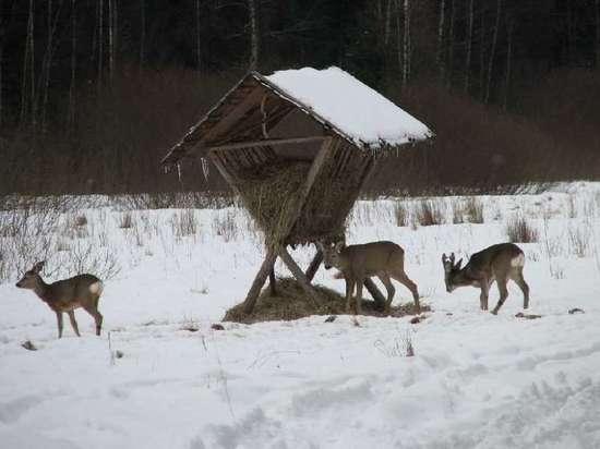 Как спасают косуль в Алтайском крае