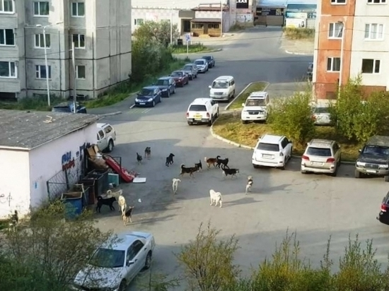 Мэр Магадана обвинил власти Колымы в занижении числа бездомных собак