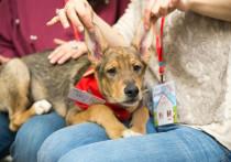 В Серпухове соберут помощь для бездомных животных