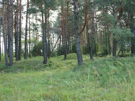 Реорганизацию областного лесхоза отменило минлеса Приангарья