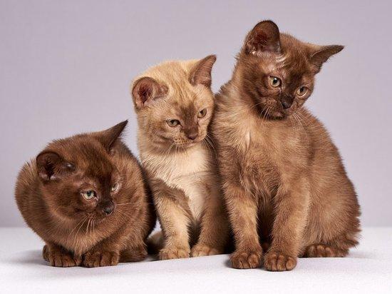 Секс втроем оказался сравним по популярности с кошками