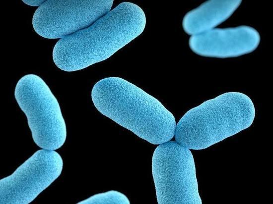 Нашли бактериофаги, которые связывают бактерии и вирусы