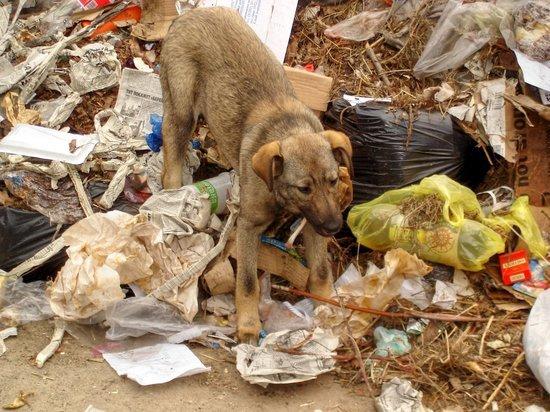 В Нежинке участок под сельское хозяйство используют для свалки мусора