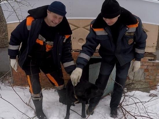 Ярославские спасатели выручили очередного пса