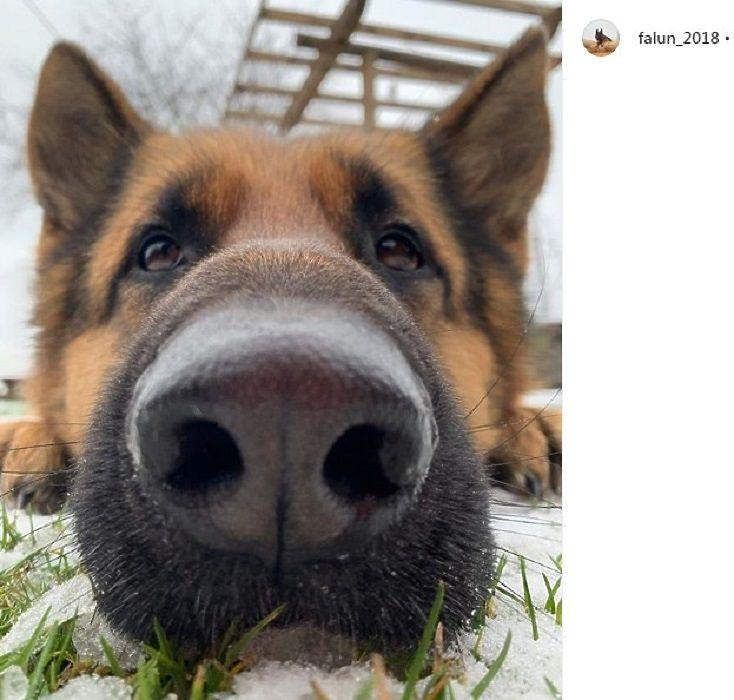 Как мощны его лапищи: пес лыжника-чемпиона Большунова покоряет инстаграм