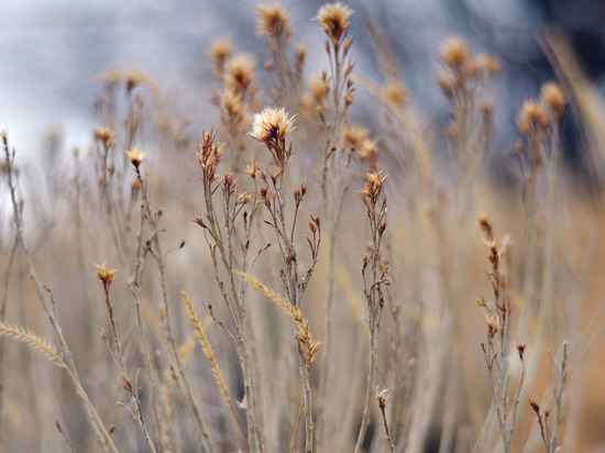 Собственникам участков в Серпухове придется удалить сухую растительность до 10 апреля