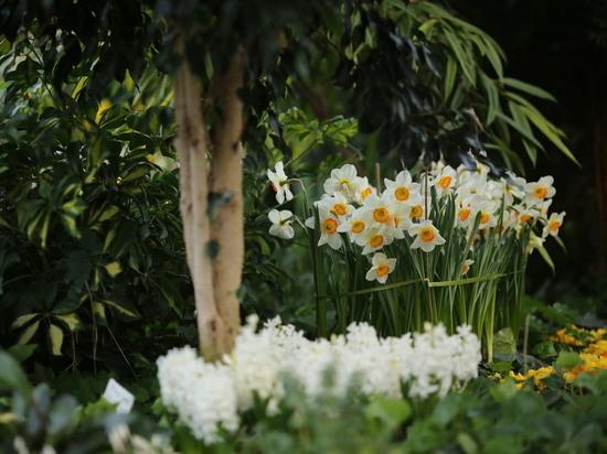 В феврале в Волгоградском ботаническом саду расцвели первоцветы