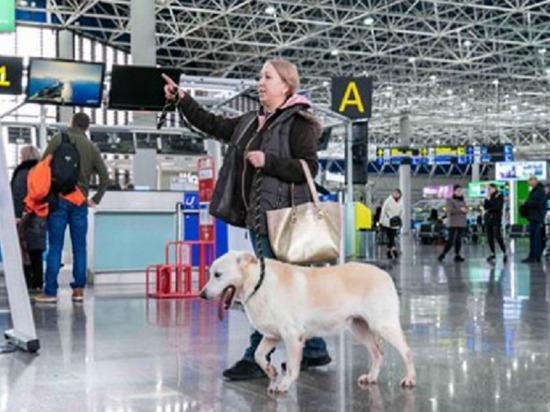 Пес Белый проверил аэропорт Сочи после истории с разбившейся клеткой-переноской при погрузке на рейс