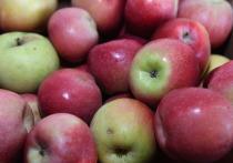 Медики назвали лучшие фрукты для сжигания жира