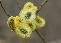 Синоптики назвали сроки наступления весны