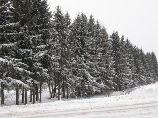Незаконные рубки леса находятся на особом контроле прокуратуры Вологодской области