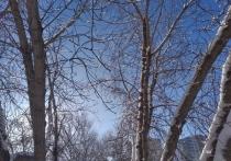 В конце февраля в Новосибирске зачем-то похолодает