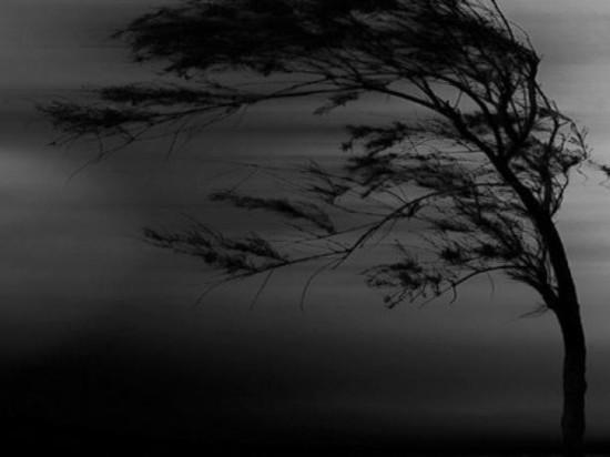 В Тверской области предупреждают о штормовом ветре