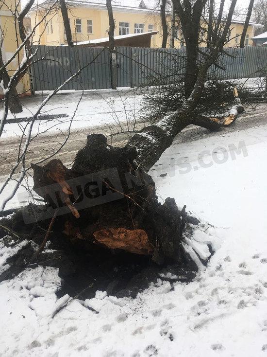 В Калуге огромное дерево упало рядом с садиком