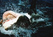 Бесстрашный серфер обругал и ударил акулу в Новой Зеландии