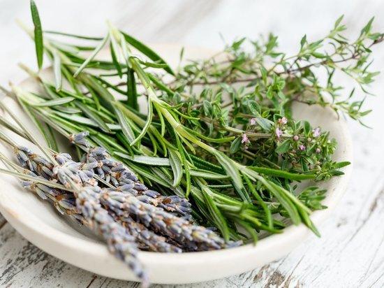 Как волгоградцам вырастить дома средиземноморские травы