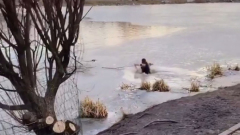Жительница Подмосковья прыгнула в ледяную воду ради спасения собаки: видео