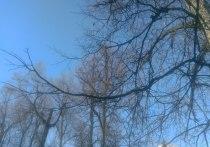 Погода в Перми вновь будет весенней