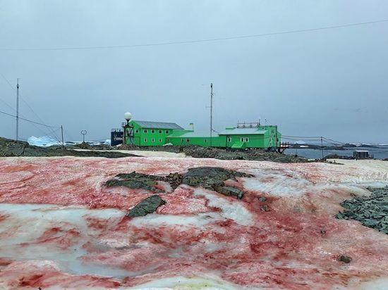 Украинскую станцию в Антарктиде накрыл «кровавый снег»