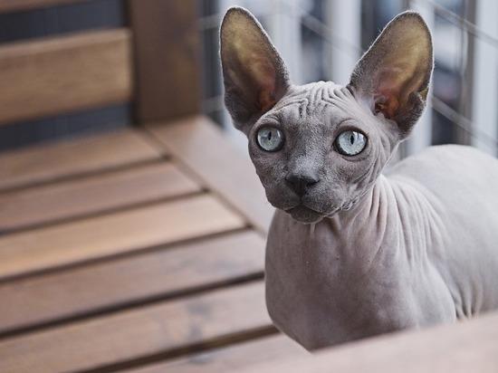 Устроитель скандальной выставки кошек опять набирает животных