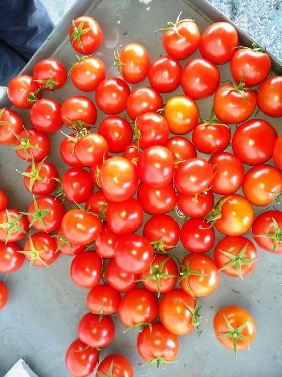Свыше 67 тонн зараженных помидоров не попадут в Дагестан