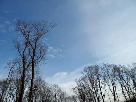 Погода на среду: тепло и ясно