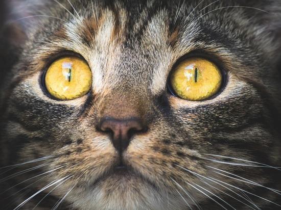 коронавирус и беременность кошки