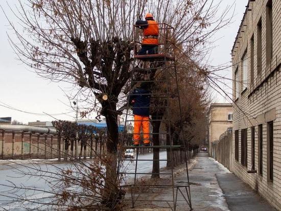 Сапожковскую администрацию обязали опилить деревья вблизи ЛЭП
