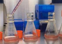 В ВОЗ одобрили подход РФ в борьбе с коронавирусом