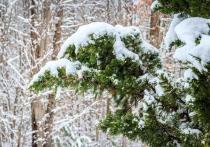 Киров ждут снегопады, дождь и сильный ветер