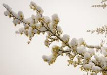 В начале весны в Кирове будет солнечно