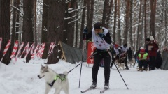 Собачий визг и лай огласили в первый день весны окрестности села Елыкаево
